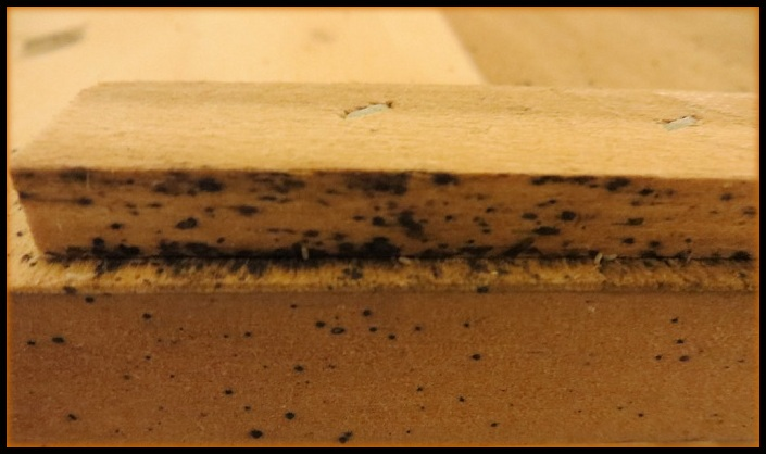 bed bugs black dots