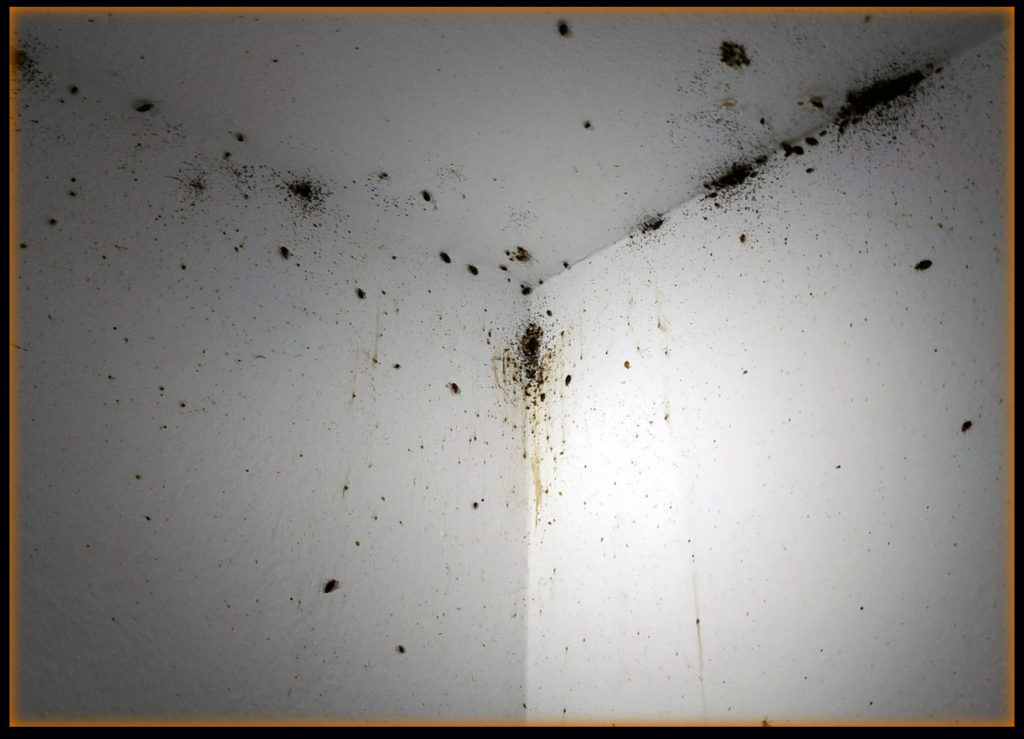 Pictures of Bed Bugs on The Ceiling